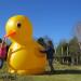 Giant duck girls