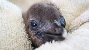 Birdworld Penguin