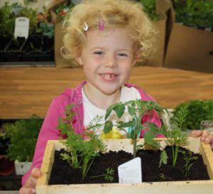 Child planting veg box