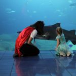 The National Marine Aquarium hosts summer party for all the family