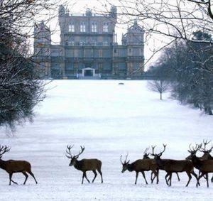 Christmas Season Events Woolaton Nottingham