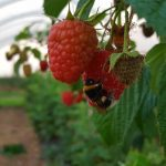 Berry Up at Eastertime