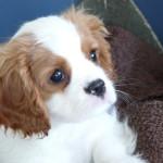 Top Five Dog Friendly Festivals