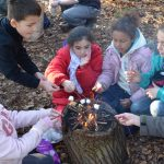 Kids go 'wild' this half-term at Painshill
