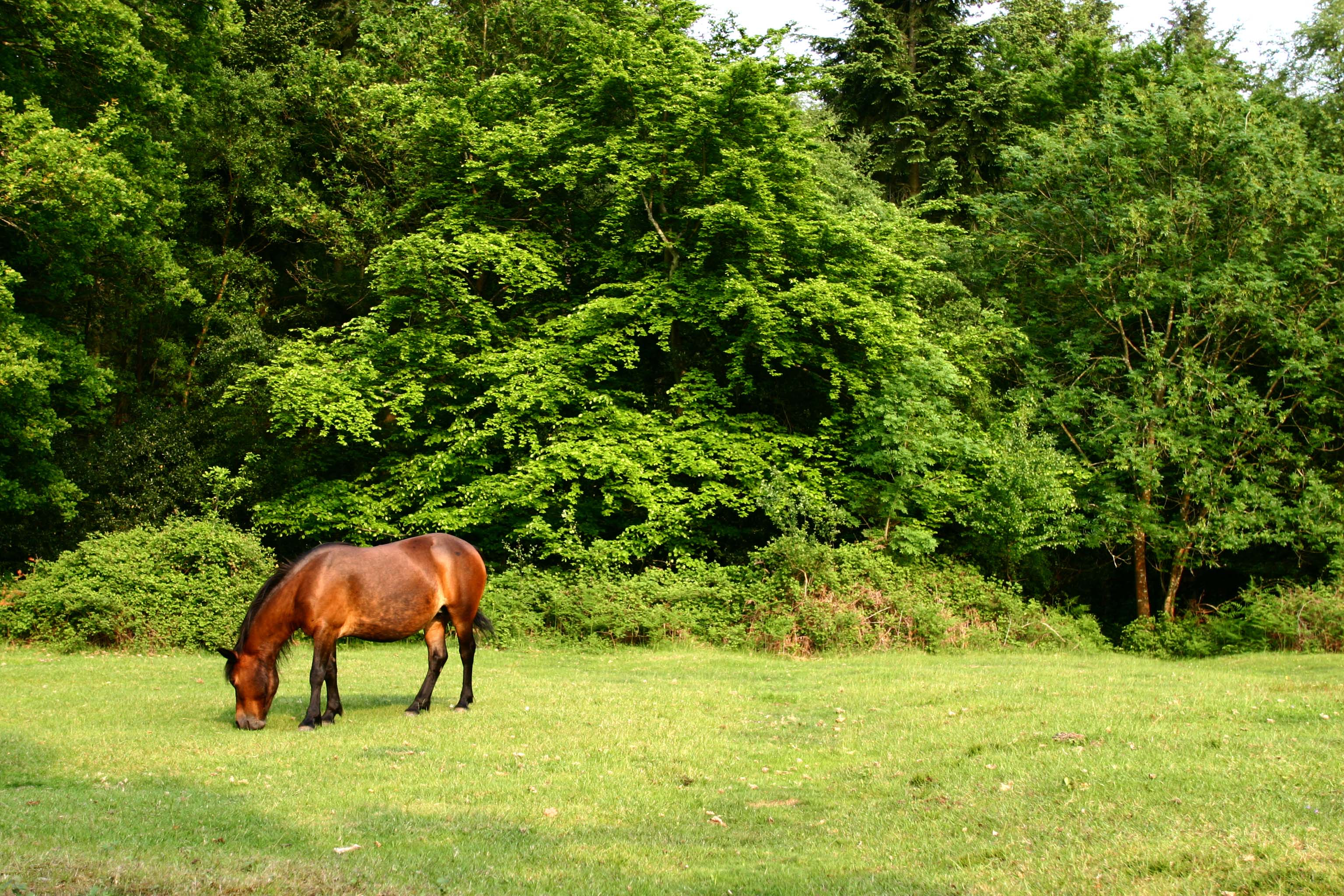 CARE FOR THE NEW FOREST